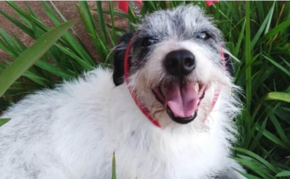 Em Taquaritinga (SP): Família procura por cachorro que escapou de residência no centro da cidade